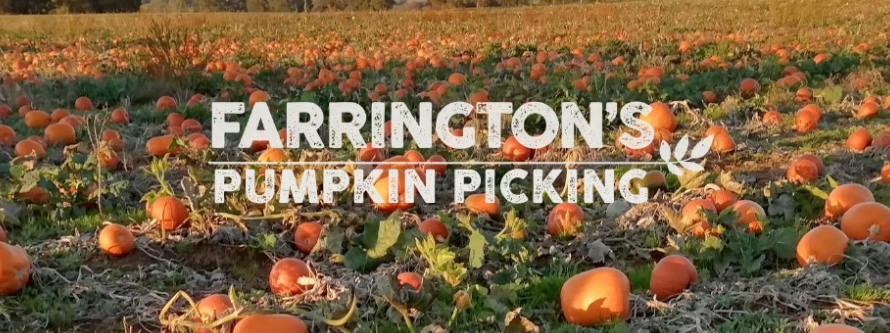 Pumpkin Picking at Farrington Farm Park