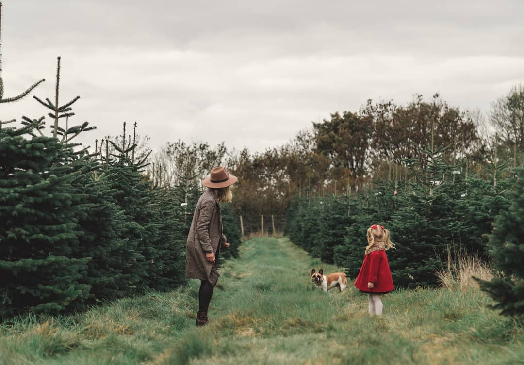 Mendip Christmas Tree Farm