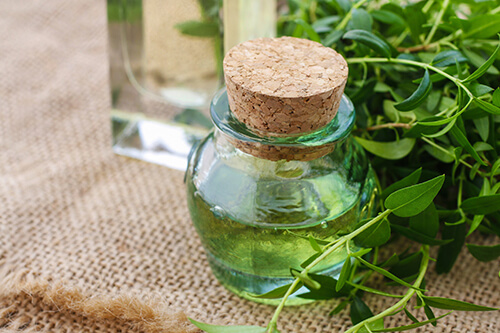 myrtle essential oil to cure pile at home