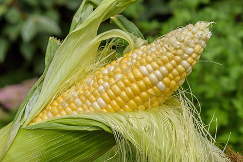 corn silk for home remedies