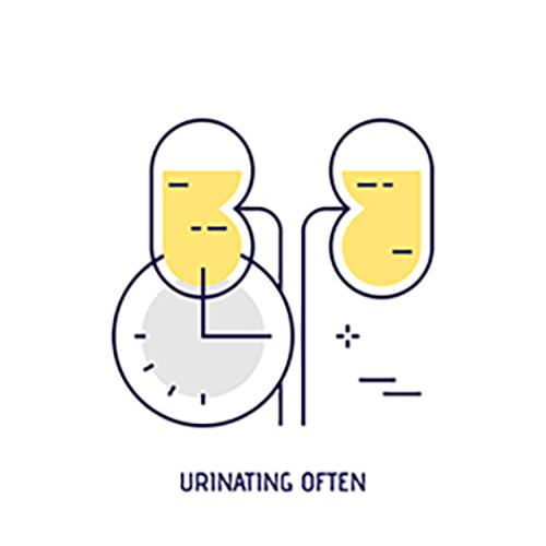 urinate in uti