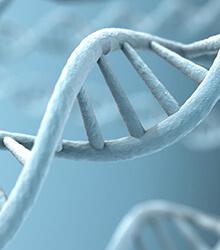 Genetics factors