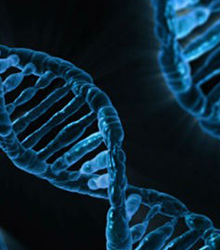 Family history and genetic factors