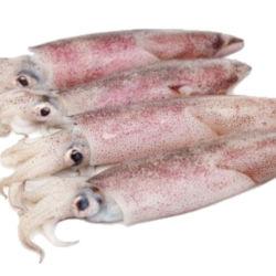 Calamaro vietnam 20/25 cb iqf al kg