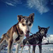 Hundesledetur med husky fra Tromsø