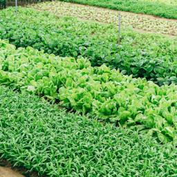 A lush green garden