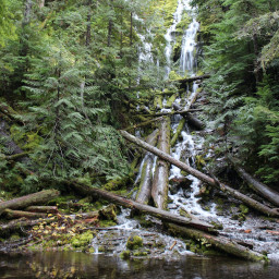 A forest waterfall pouring over fallen logs into a pond