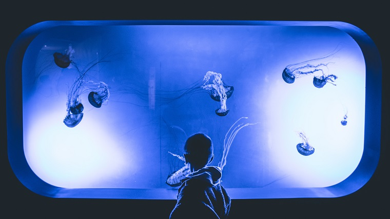 Kid at Aquarium looking into tank at jellyfish
