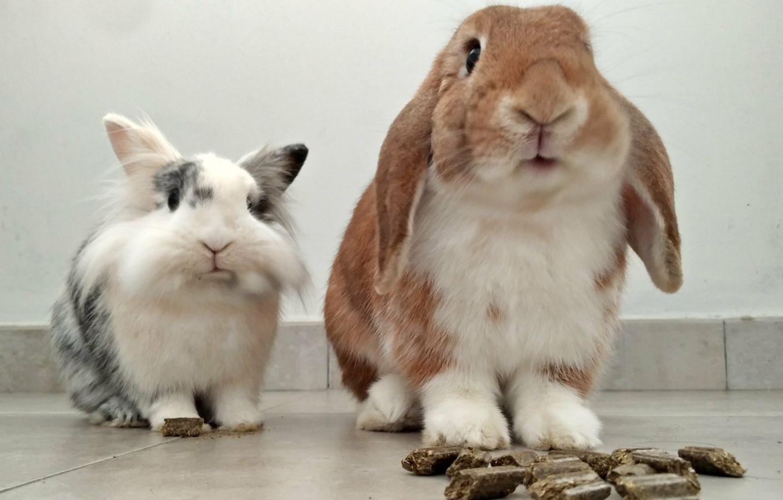 Pelitos felices - Miwa and Fry