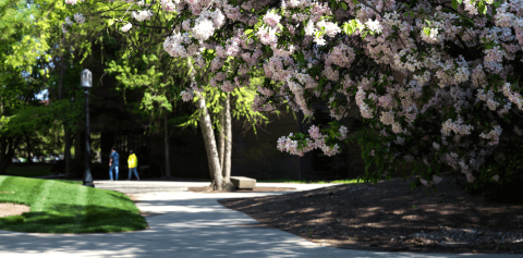 A tree with pink flowers next to a campus sidewalk