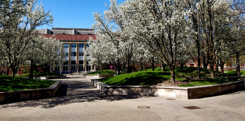 Trees with white flowers next to campus buildings