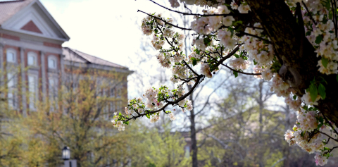 Purdue buildings surrounded by flowering trees