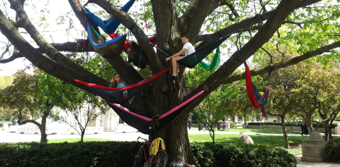 Students in hammocks on a summer day