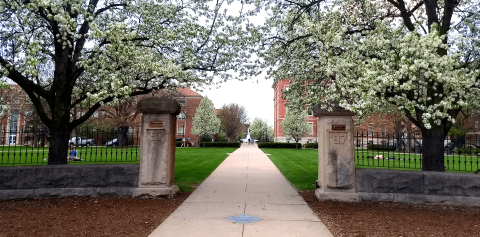 A campus walkway lined with flowering trees