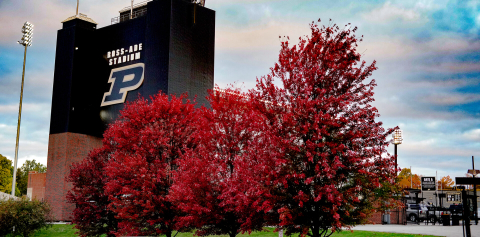 Trees with red leaves outside of Ross-Ade Stadium