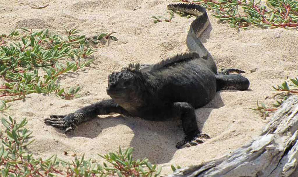 Dragon Hil | Galapagos