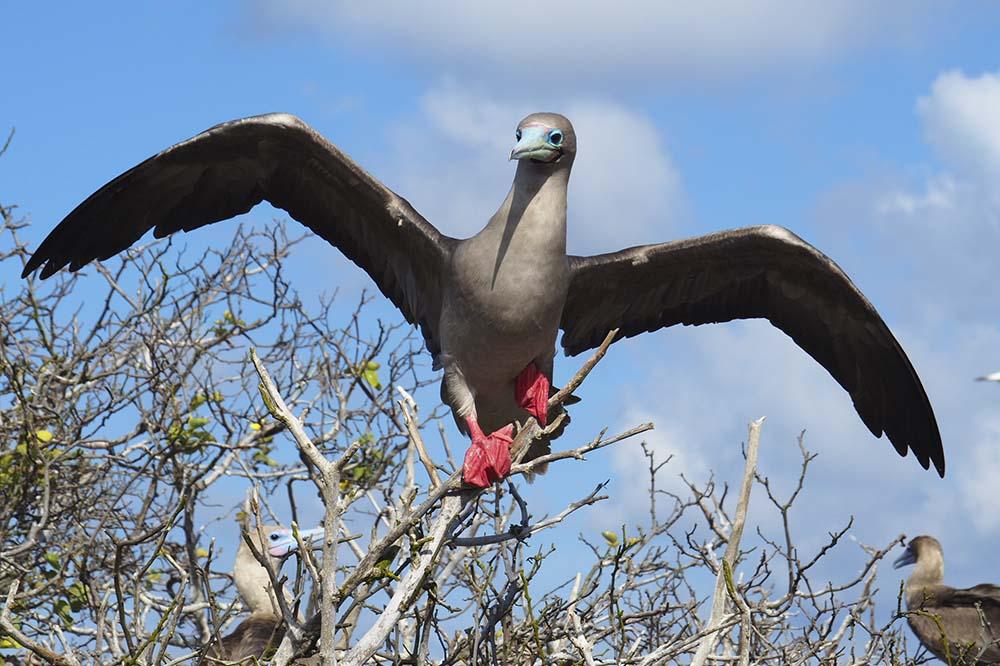 Genovesa island | Galapagos islands