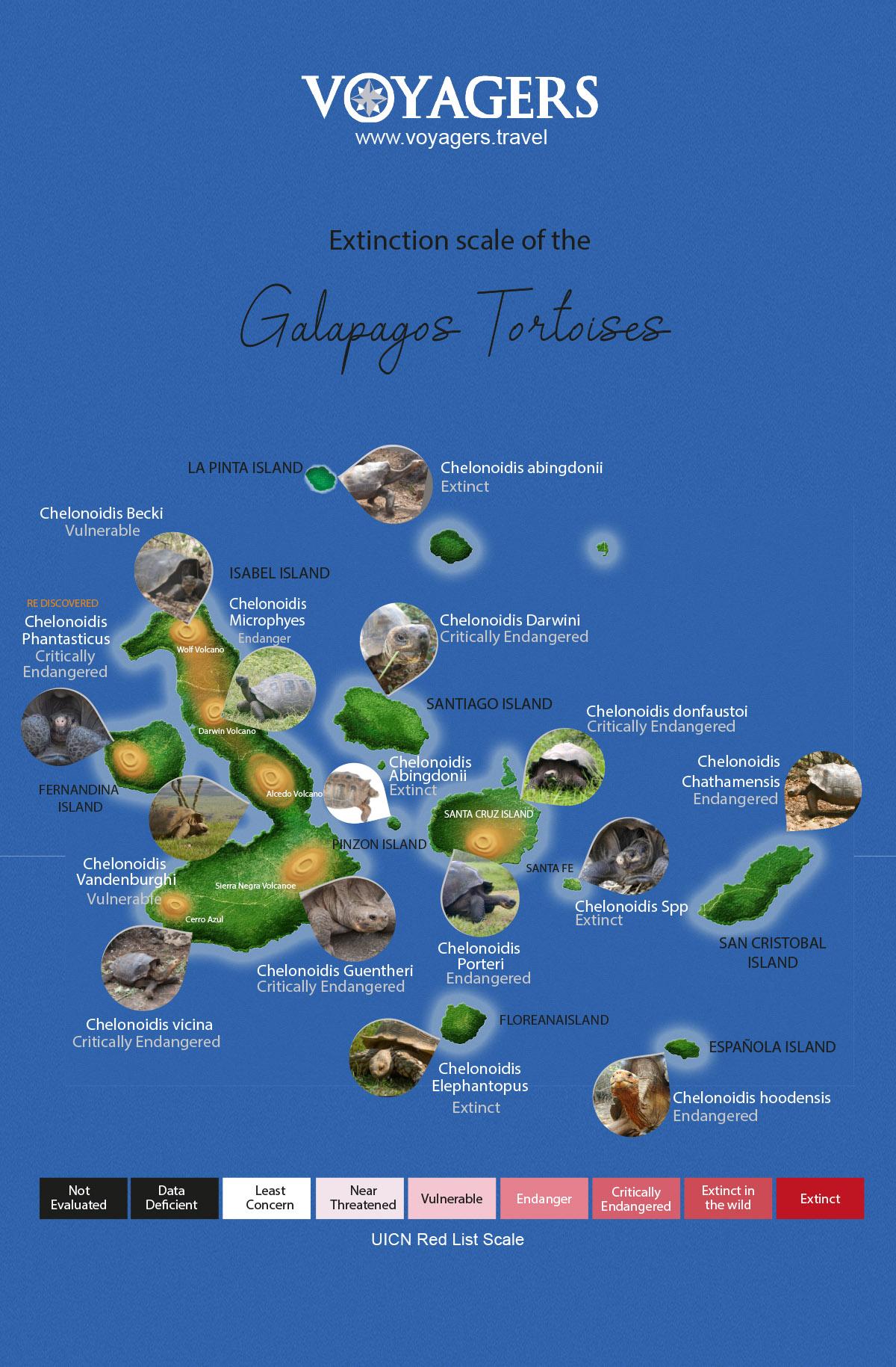 Endangered Galapagos Tortoises
