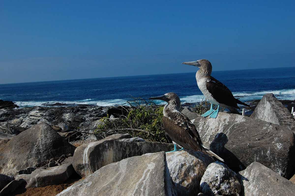 Española island | Galapagos