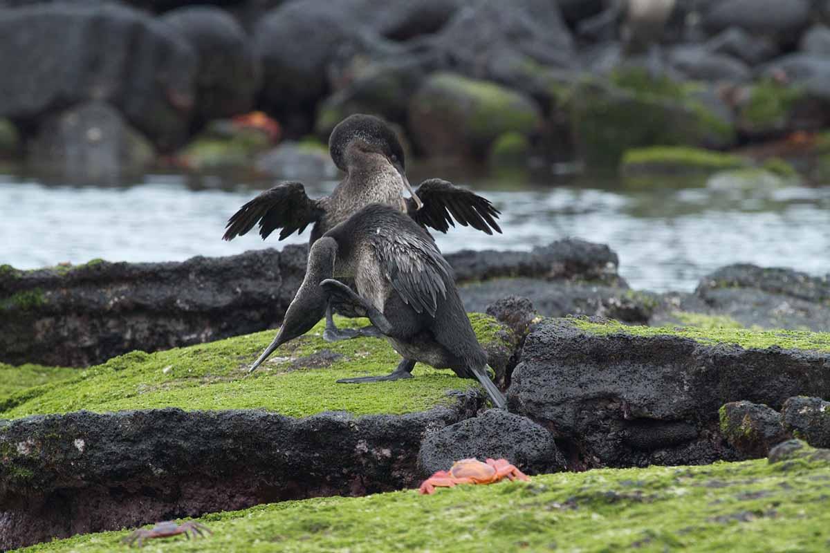 Cormorant Point | Galapagos islands