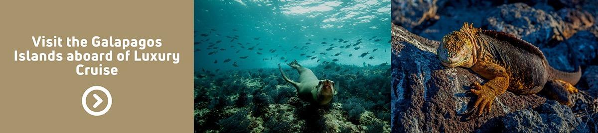 Galapagos islands | Galapagos luxury cruises