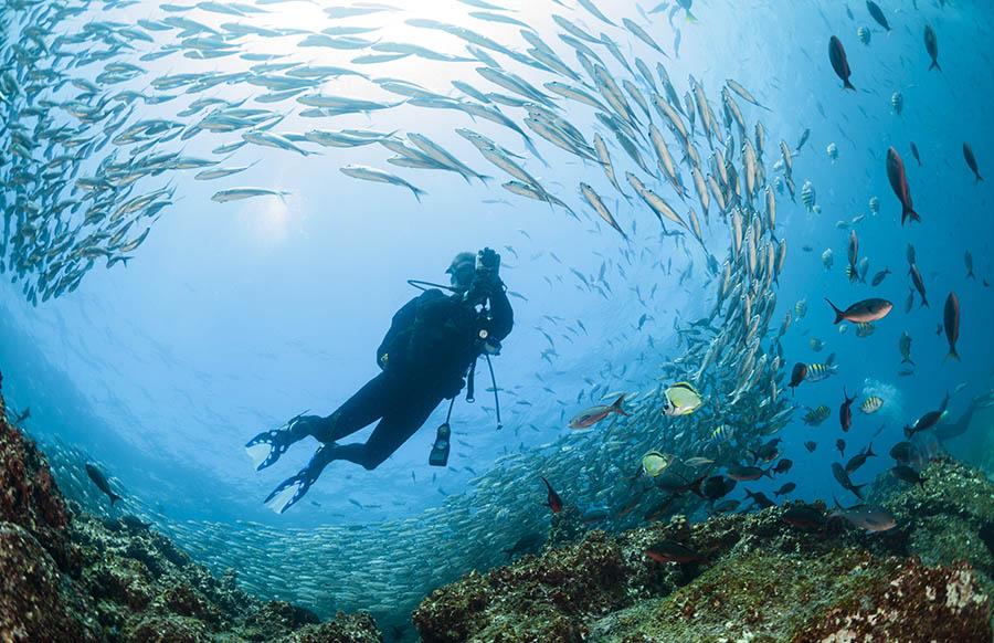 Galapagos diving experiences