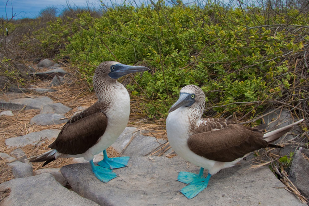 Galapagos Photography Guide and Tips Voyagers Travel Specialists