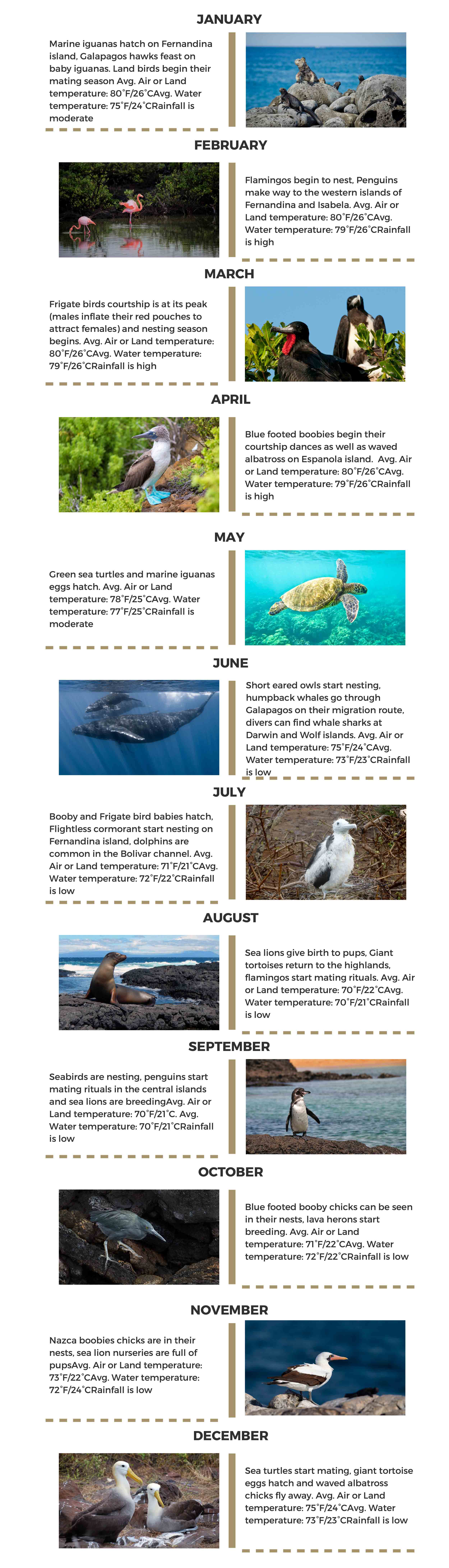 Galapagos islands Infographic