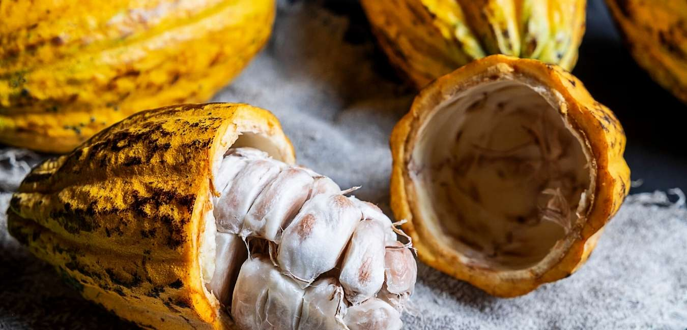 Kontiki Expeditions   Cacao