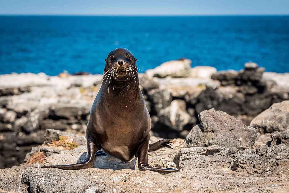 Lobos Island | Galapagos Islands