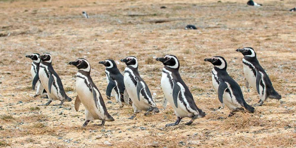 Magdalena island | Patagonia cruises