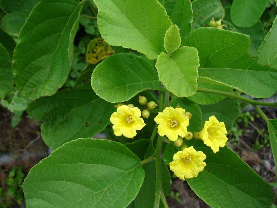 arid plant galapagos