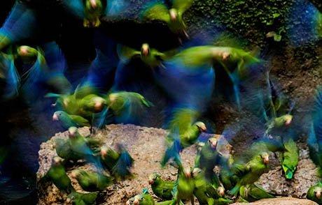 Amazon Birds | Ecuador