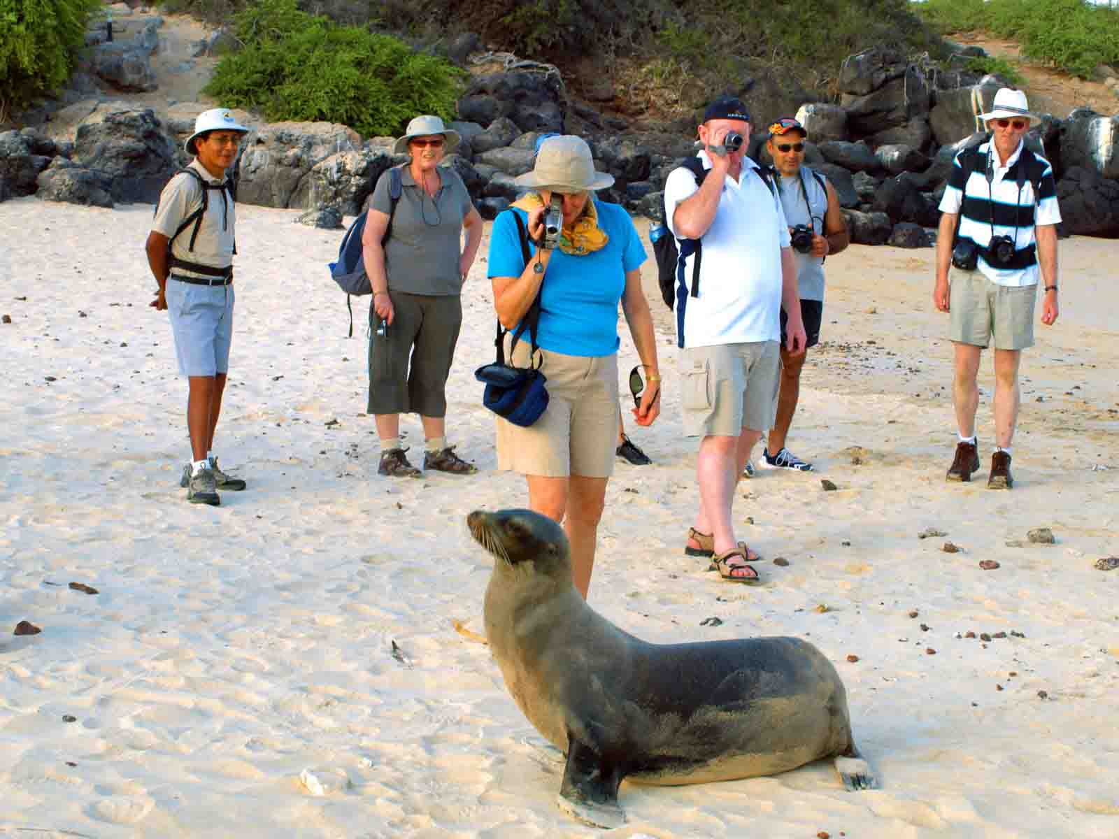 Galapagos Islands Experience | Sea Lion