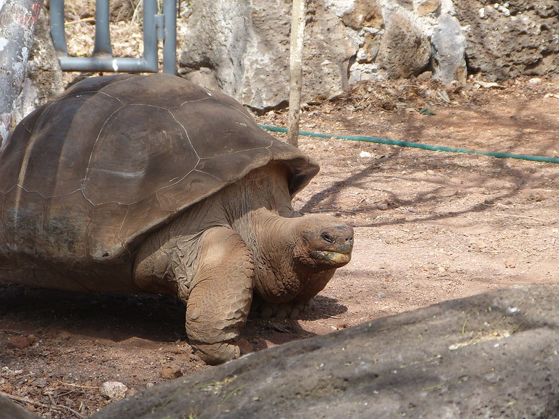 Giant tortoise | Galapagos islands