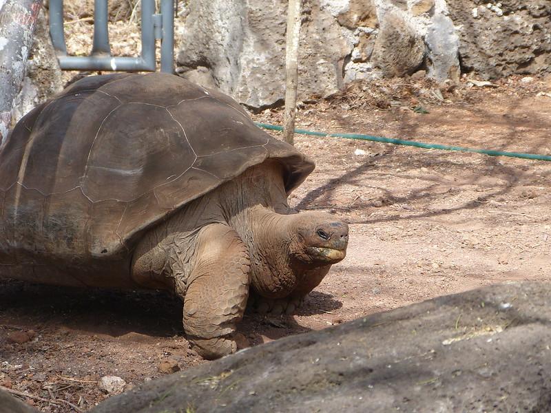 Giant tortoise | Galapagos islands