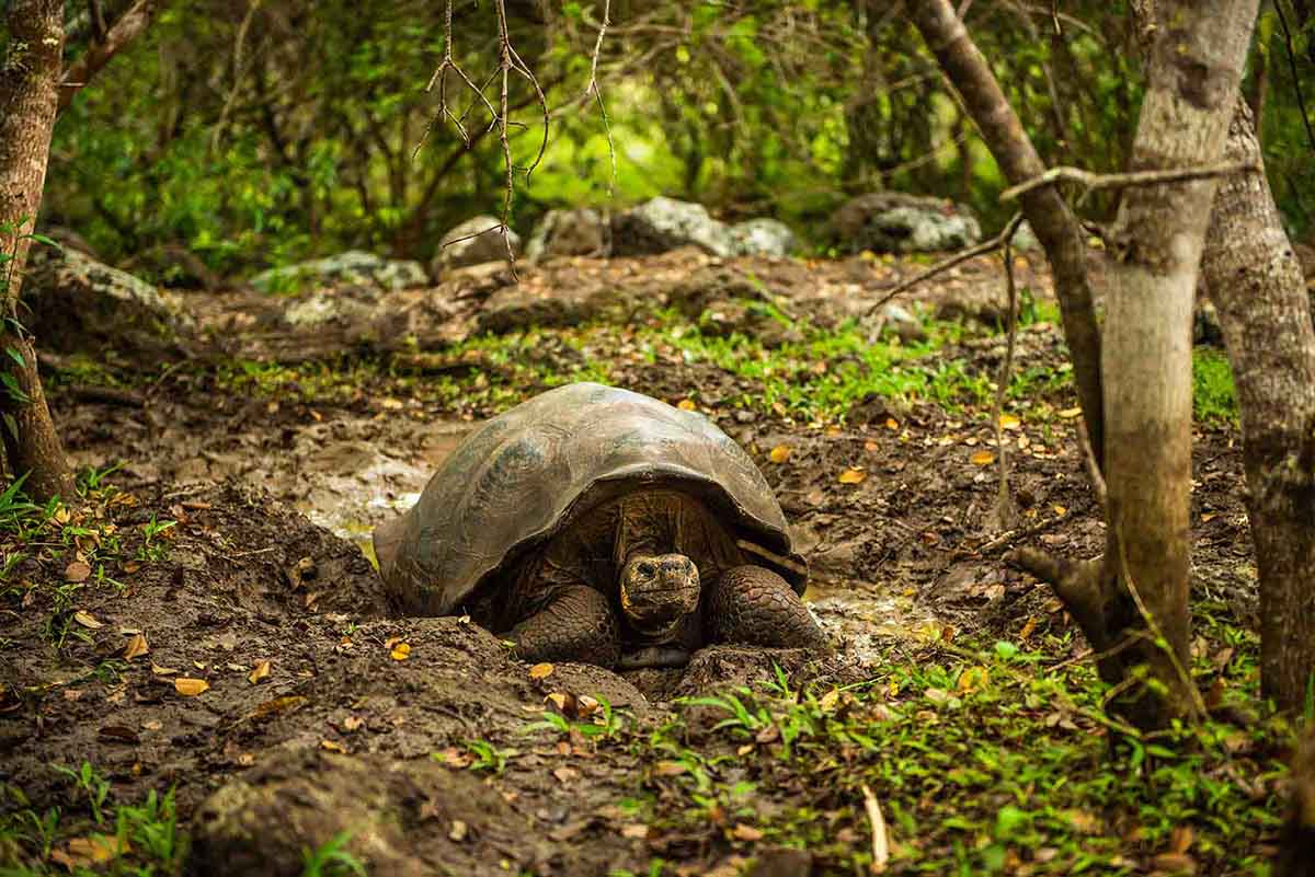 Santa Cruz | Galapagos Islands