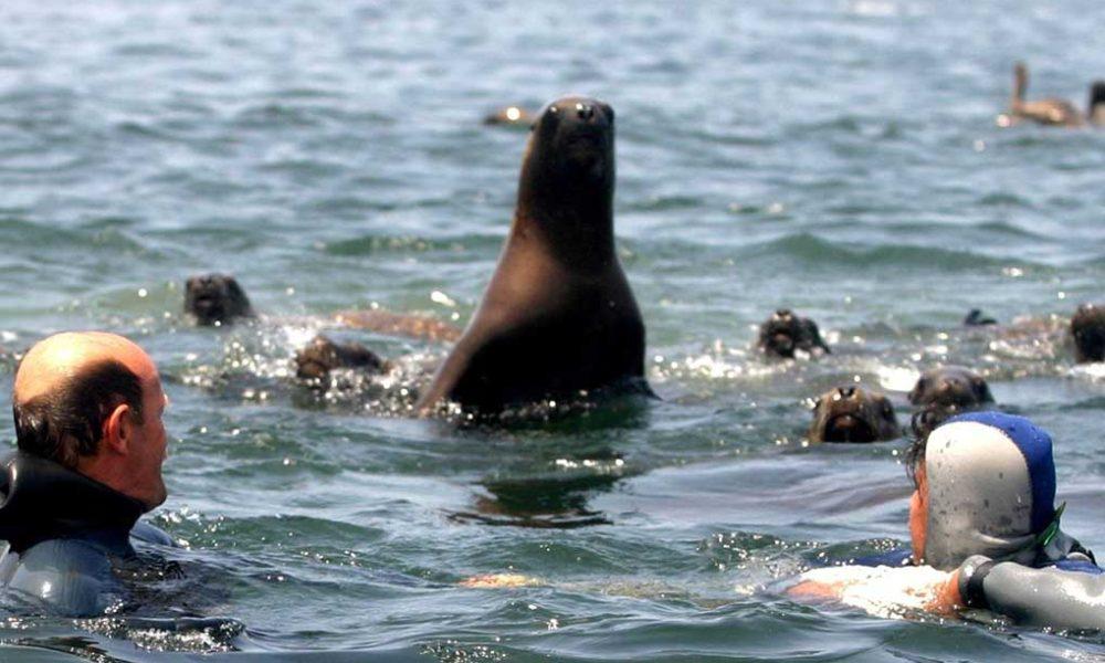 Sea Lions | Lima