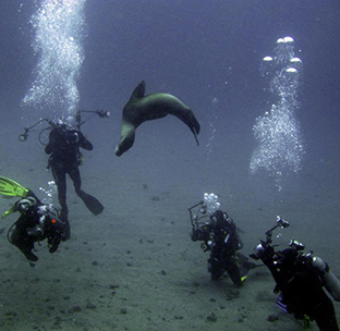 Bartolome island diving