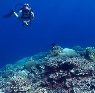 Black coral Galapagos