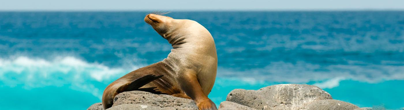 charles darwin visit galpagos