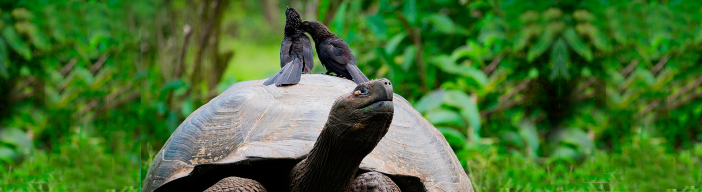 conservation in galapagos