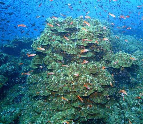 corals galapagos