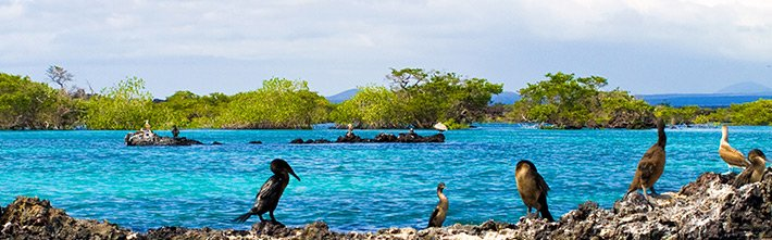 Coastal zone Galapagos