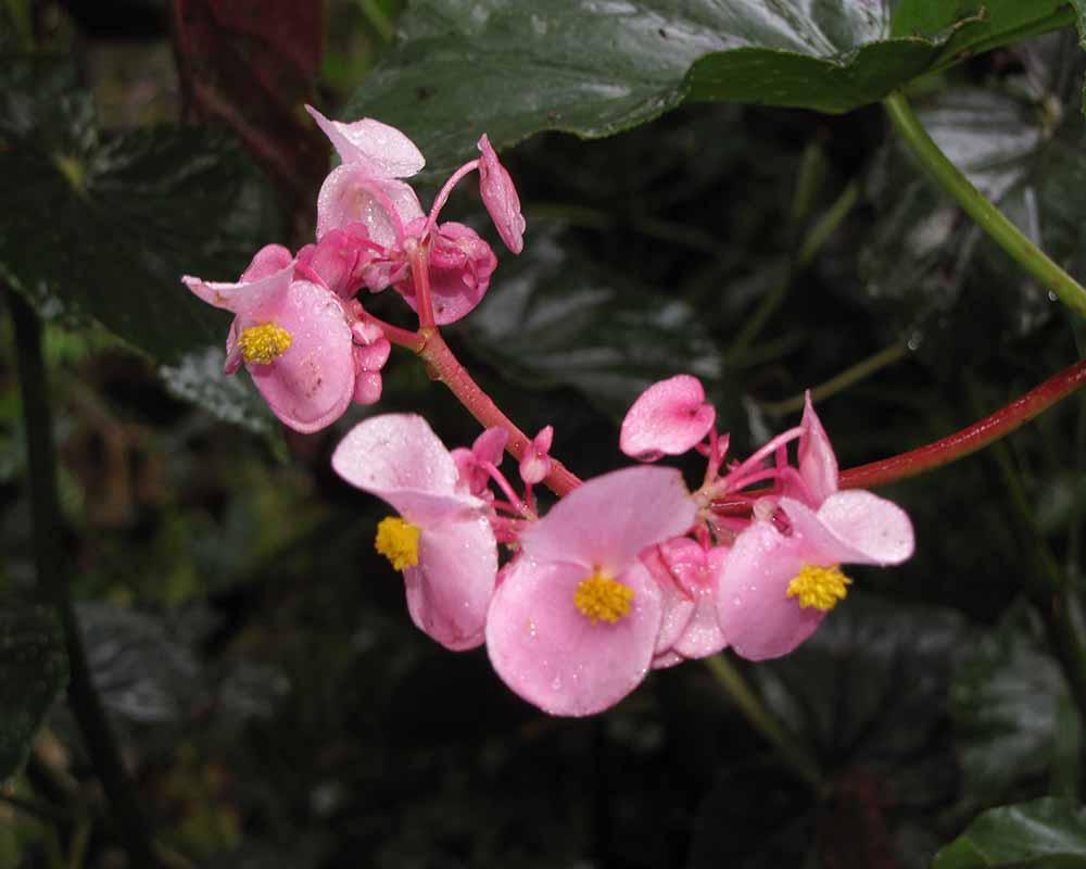 Orchids | Peru