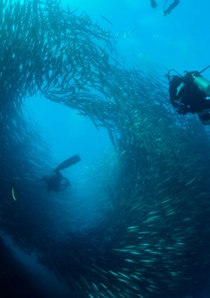 diving in galapagos islands