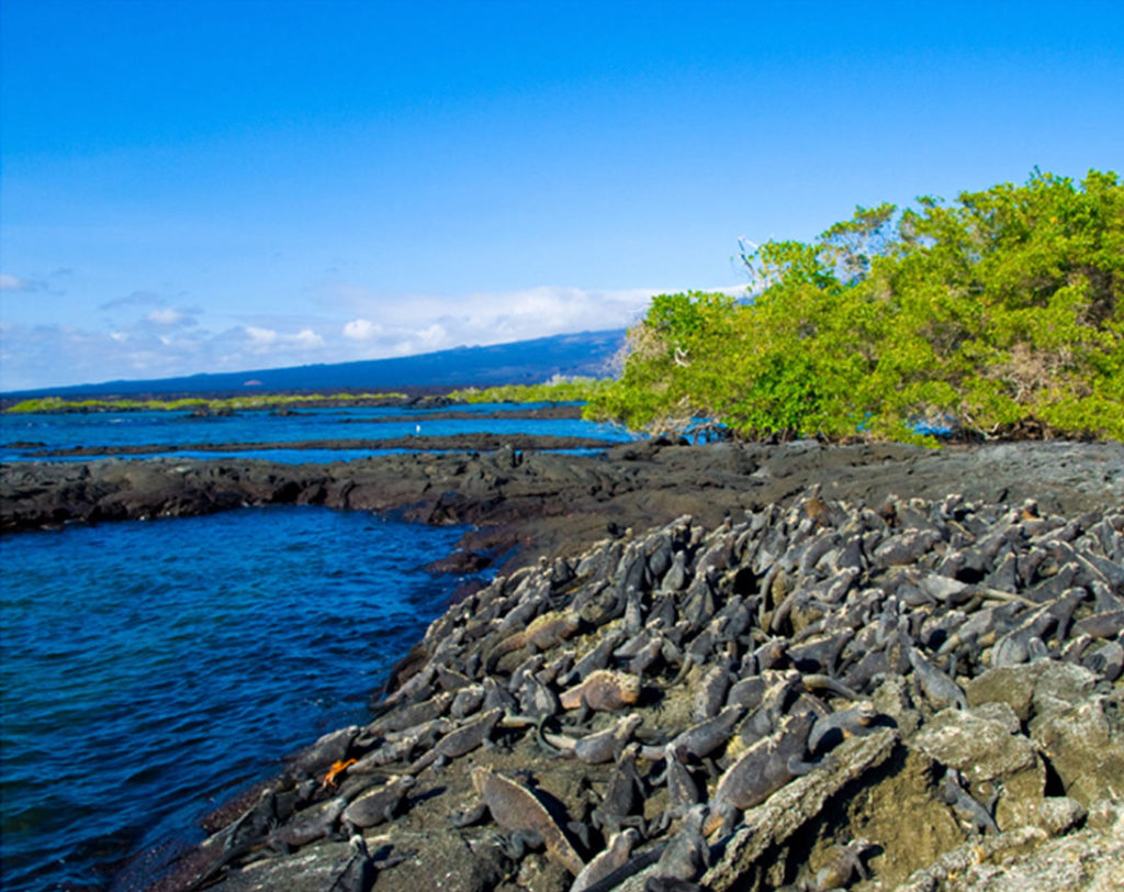 Santiago island | Galapagos islands