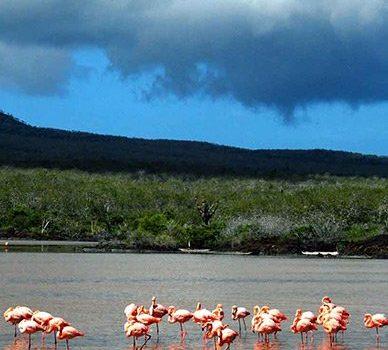 flamingos galapagos