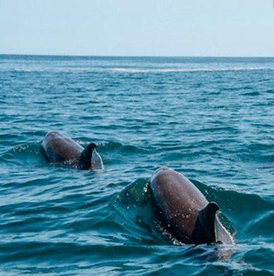 galapagos dolphins