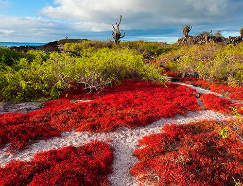 Galapagos Plantlife